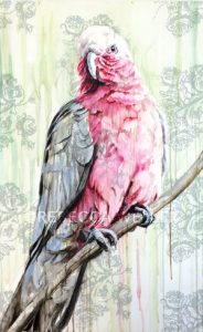 Rebecca Weller Gallery Veronique Galah Cockatoo 30x48